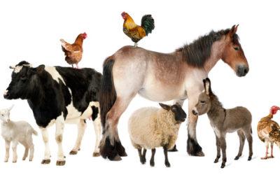 PROTOCOLO DE BIENESTAR ANIMAL